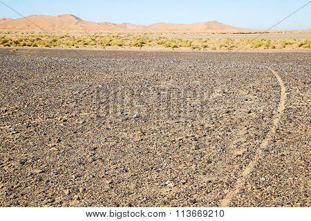 Bush Old Fossil In  The Desert Of Street