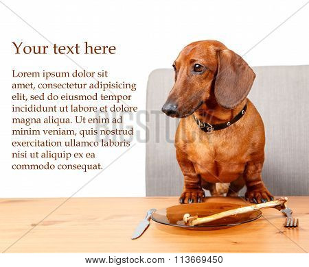 Poster With Funny Dog Sitting At The Table With Text Area