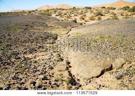 Old Fossil In  The Desert   Morocco Sahara    Stone Sky