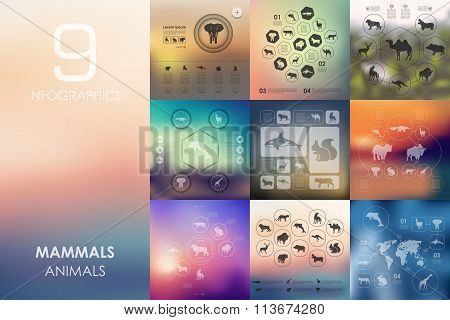 mammals infographic with unfocused background