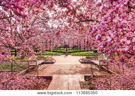 Washington DC spring foliage near the National Mall.
