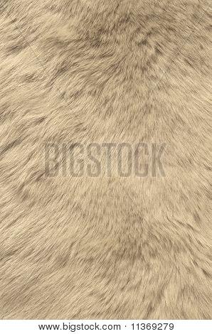 Texture of skin of polar bear.
