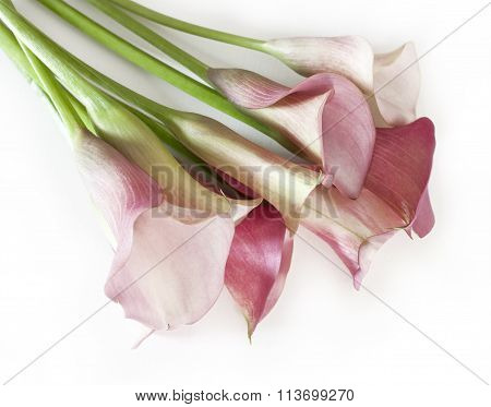 Tender dusty pink callas bouquet on white background