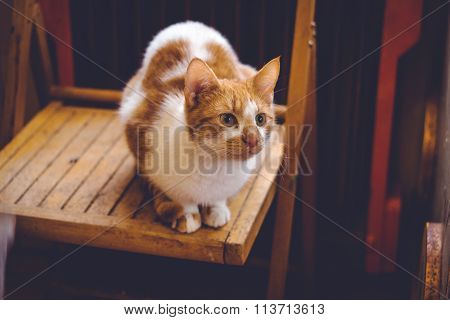 Lovable ginger cat  at home