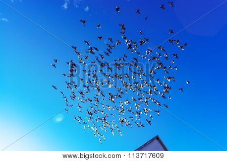 Birds Flock On Blue Sky Background