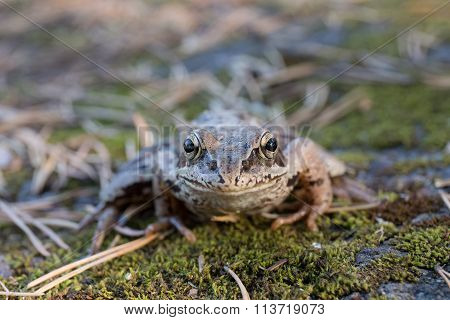 Toad On Green Moss