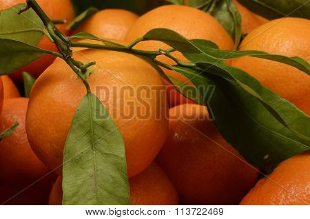 Mandarin Or Tangerin With Green Leaves