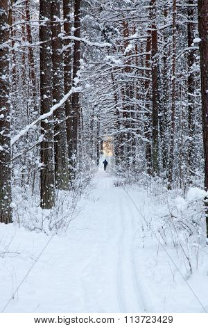 Ski track in the forest