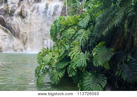 Waterfall In The Jardin Botanique De Deshaies, Guadeloupe Island