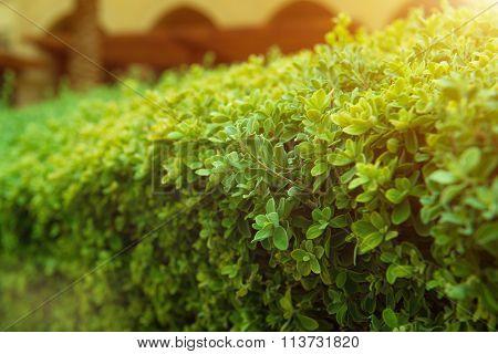 Green bush with white flower.