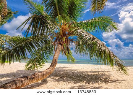 Paradise beach on tropical island Mahe in Seychelles