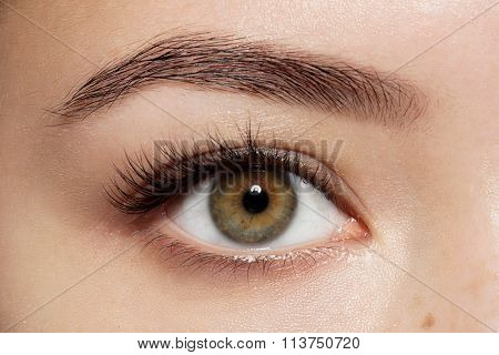 Close-up Of Make-up Green Eye With Long Eyelashes And Brown Eyebrows