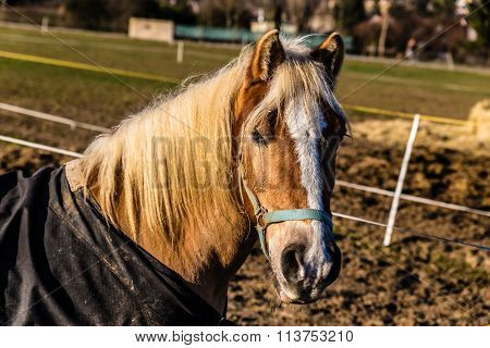 Horse Head With Halter During Sunny Winter Day