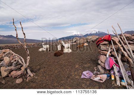 Llamas Farm