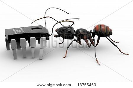 Ant Meeting Computer Bug