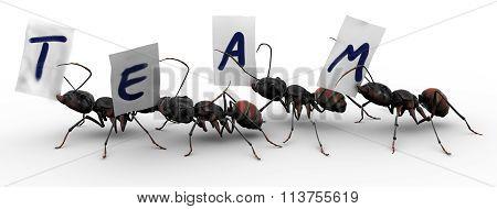 Four Ants Four Ants Team Work
