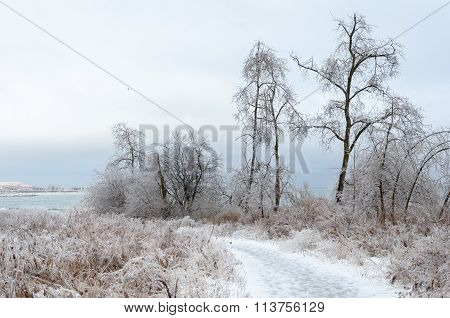 Frozen Winter Landscape