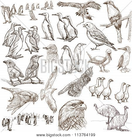 Animals Around The World, Birds. Freehand Drawings.