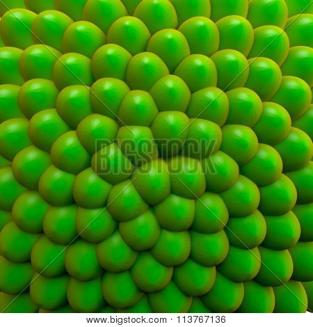 Fiboacci Pattern, Seed Cluster, Green Earth Concept