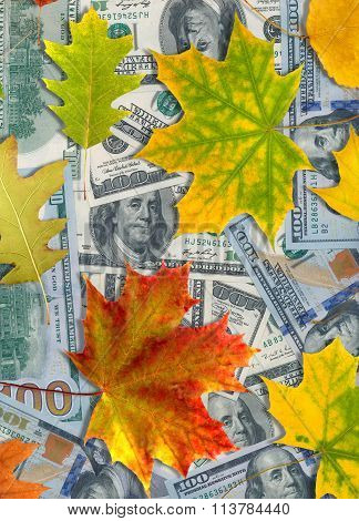 Image of dollars and autumn leaves