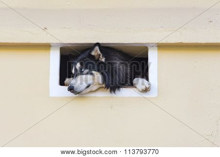 Cute Curious Dog Pet Looking Through a Vent