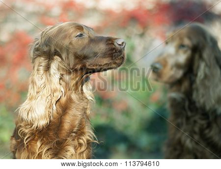 Beautiful Dog Smelling