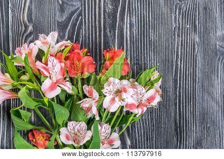 Alstroemeria On Rustic Background