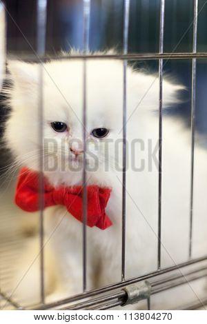 White Kitten In A Pet Shop