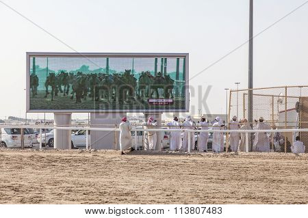 Camel Race In Doha, Qatar