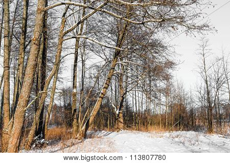 Winter. Landscape. Background.