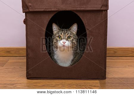 Personal Home For The Cat