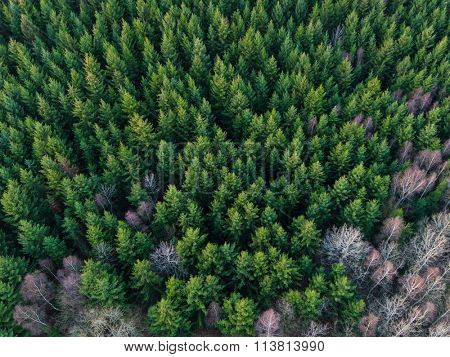 Aerial view of winter forest without snow.