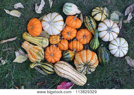 Gourd Squash