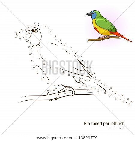 Pin tailed parrotfinch bird learn to draw vector