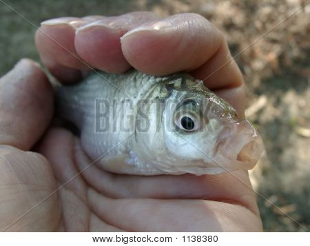 Fish In Your Hand