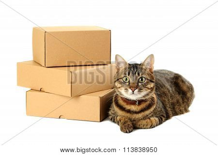 Empty Cardboard Boxes With Cat Isolated On A White