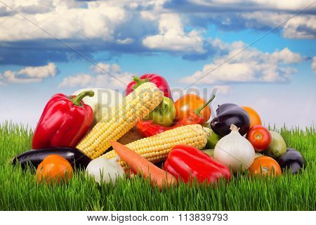Ripe Vegetables On Green Grass