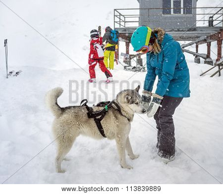 Young Woman Playing With Dog Siberian Husky