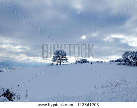 tree on snowy peek