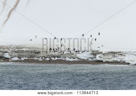 Gentoo Penguins On Neko Habor