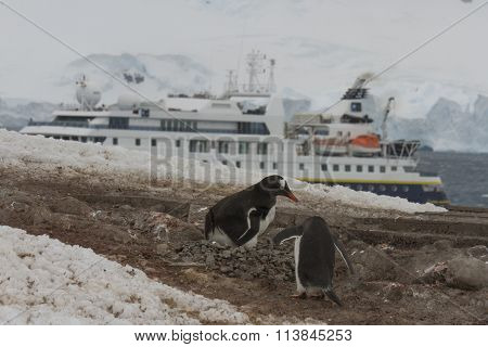 National Geographic Ship At Neko Harbor, Antarctica