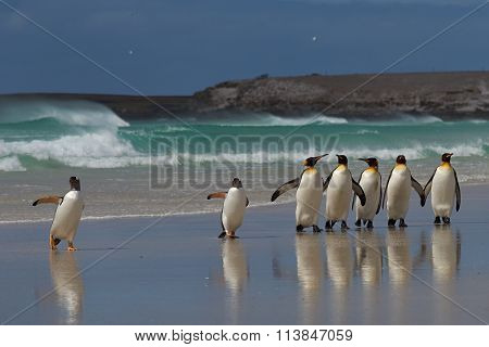 Penguin Beach