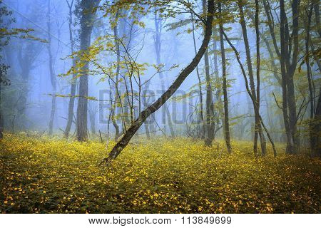 Mysterious dark old forest in fog with flowers.