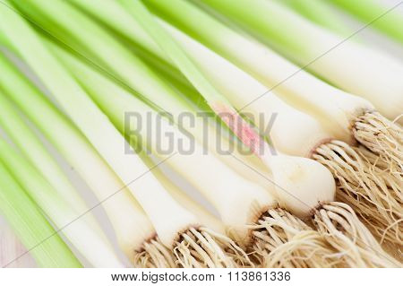 Green Garlic Sprouts With Roots