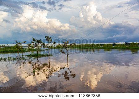 Amazon River Reflection