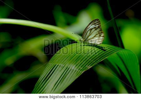 Butterfly On Green Leaf In Forrest
