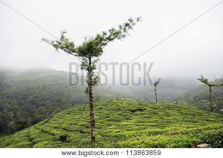 Spectacular Green Landscape