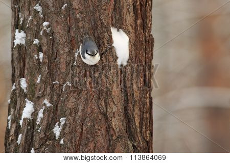 Tits, chickadees, titmice constitute Paridae, a large family of small passerine birds
