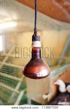 Infrared lamp additional heating poultry chicken coop suspended from the ceiling hangs vertically, t
