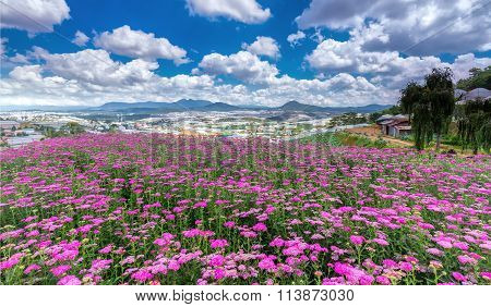 Flower gardens on the plateau of Dalat